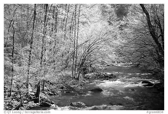 Middle Prong of the Little River in the sun, Tennessee. Great Smoky Mountains National Park (black and white)