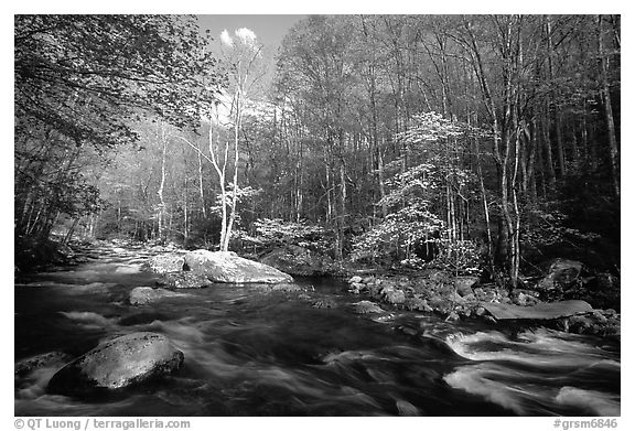River and dogwoods, late afternoon sun, Middle Prong of the Little River, Tennessee. Great Smoky Mountains National Park (black and white)