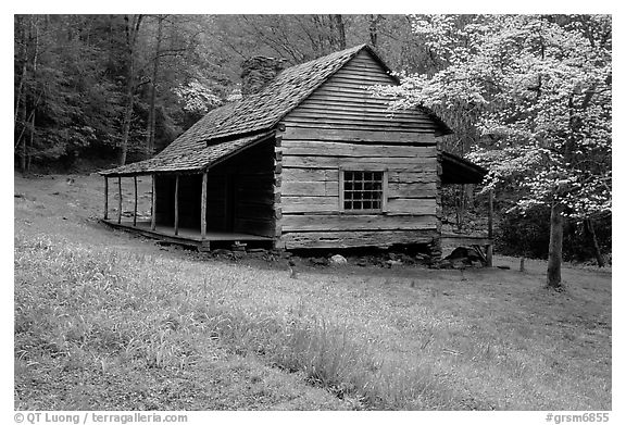 Noah Ogle Farm and dogwood tree in bloom, Tennessee. Great Smoky Mountains National Park (black and white)
