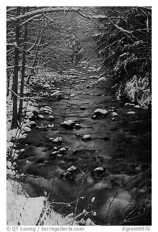 Creek and snowy trees in winter, Tennessee. Great Smoky Mountains National Park (black and white)