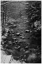 Creek and snowy trees in winter, Tennessee. Great Smoky Mountains National Park, USA. (black and white)