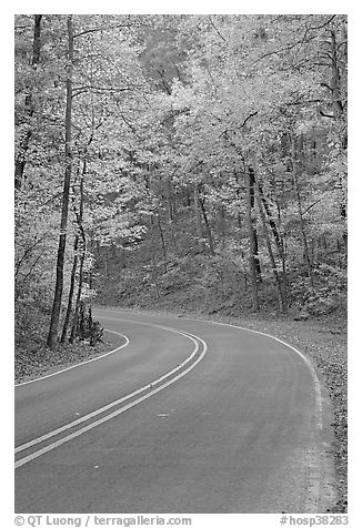 Road curve and fall colors on West Mountain. Hot Springs National Park (black and white)