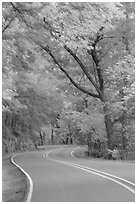 Rood, curve, fall colors, West Mountain. Hot Springs National Park, Arkansas, USA. (black and white)