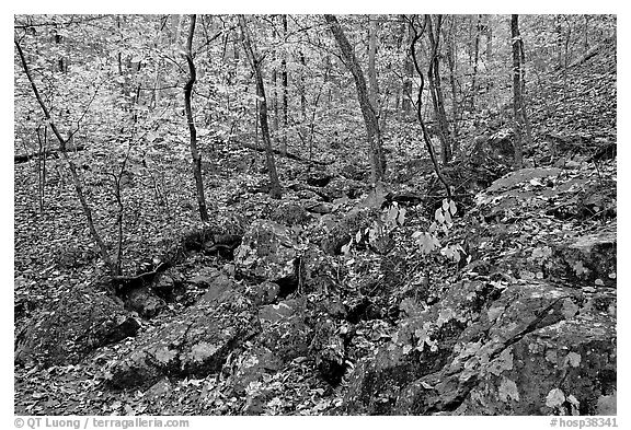 Boulders and trees in fall colors, Gulpha Gorge. Hot Springs National Park (black and white)