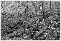 Boulders and trees in fall colors, Gulpha Gorge. Hot Springs National Park, Arkansas, USA. (black and white)