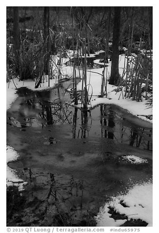Reflections in partly thawed Great Marsh. Indiana Dunes National Park (black and white)