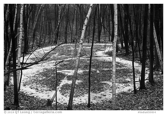 Birch trees and frozen pond, Cowles Bog Trail. Indiana Dunes National Park (black and white)