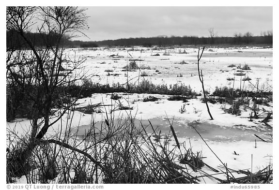 Cowles Bog. Indiana Dunes National Park (black and white)