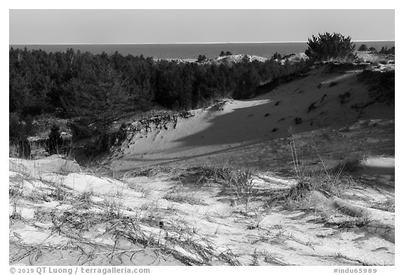 Dunes and Lake Michigan, Dune Succession Trail. Indiana Dunes National Park (black and white)