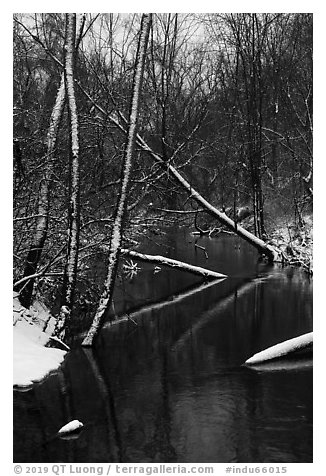 Little Calumet River in winter, Heron Rookery. Indiana Dunes National Park (black and white)