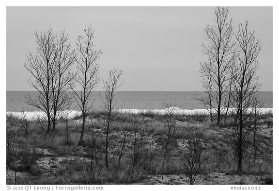 Bare trees and Lake Michigan in winter. Indiana Dunes National Park (black and white)