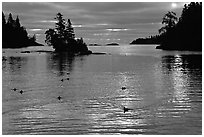 Loons, early morning on Chippewa harbor. Isle Royale National Park, Michigan, USA. (black and white)