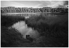Grasses and East Chickenbone Lake. Isle Royale National Park, Michigan, USA. (black and white)