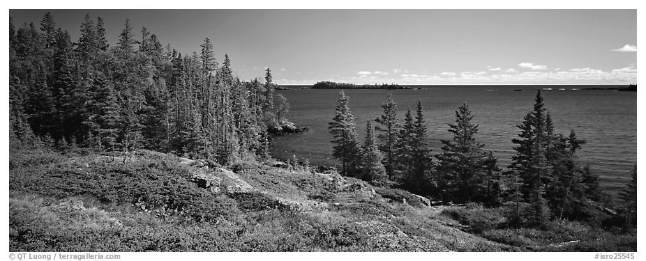 Lakeshore and trees. Isle Royale National Park (black and white)