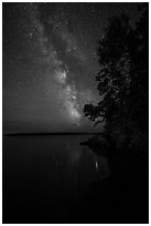 Milky Way and tall trees from Rock Harbor. Isle Royale National Park ( black and white)