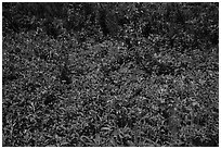 Dense summer vegetation, Passage Island. Isle Royale National Park ( black and white)