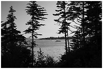 Islands through trees from Tookers Island, late afternoon. Isle Royale National Park ( black and white)