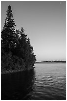 Trees growing at edge of water on Tookers Island. Isle Royale National Park ( black and white)