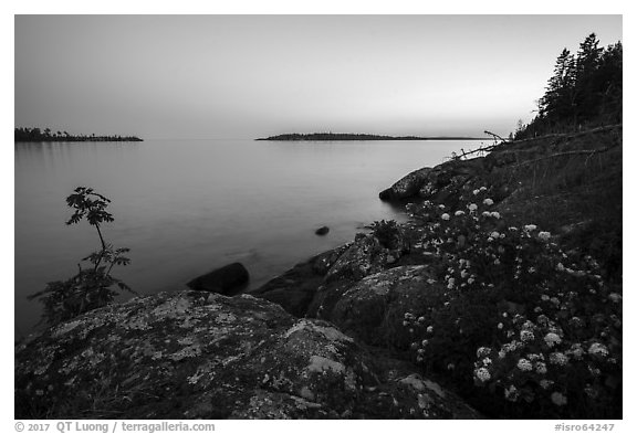 Summer wildflowers and islands, Rock Harbor, sunset. Isle Royale National Park (black and white)