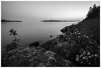 Summer wildflowers and islands, Rock Harbor, sunset. Isle Royale National Park ( black and white)