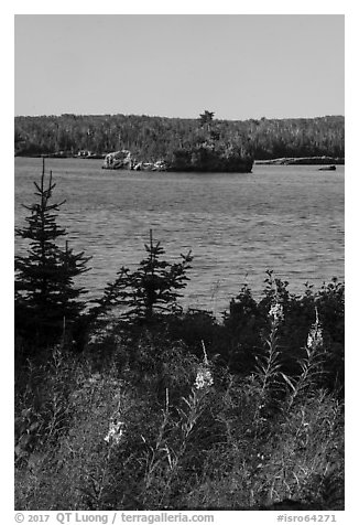 Fireweed, inlet, and forest, Caribou Island. Isle Royale National Park (black and white)