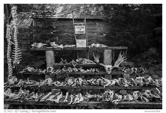 Mooseum of pathology. Isle Royale National Park (black and white)