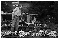 Rolf Peterson points to speciment of moose skull exhibiting pathology. Isle Royale National Park ( black and white)