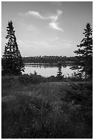 Yellow wildflowers, Moskey Basin. Isle Royale National Park ( black and white)