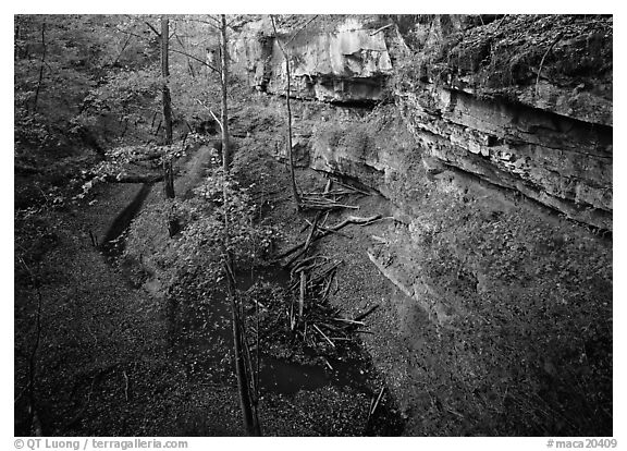 Limestone cliffs and karstic depression in autumn. Mammoth Cave National Park (black and white)