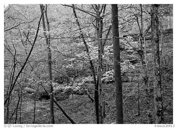 Trees and limestome cliffs in autumn. Mammoth Cave National Park (black and white)