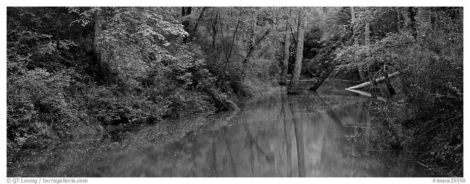 Spring forest scene with trees reflected in pond. Mammoth Cave National Park (black and white)