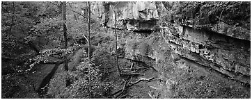 Limestone cliffs and forest. Mammoth Cave National Park (Panoramic black and white)