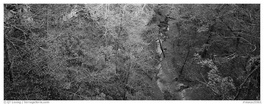 Forest and stream seen from above. Mammoth Cave National Park (black and white)