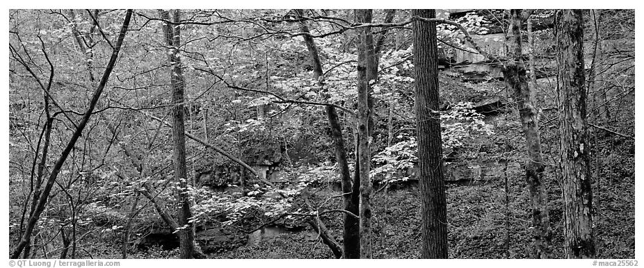 Forest in autumn and cliffs. Mammoth Cave National Park (black and white)