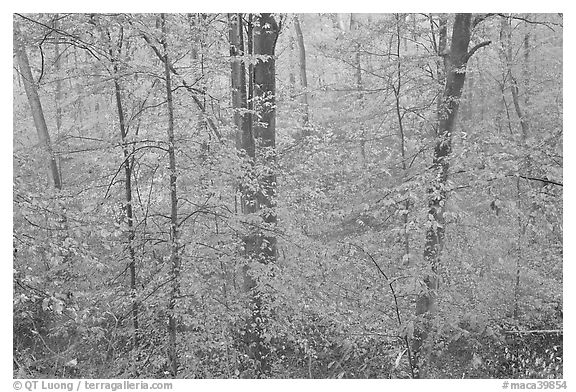 Drizzle and fall colors. Mammoth Cave National Park (black and white)