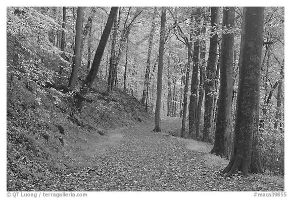 Trail covered with fallen leaves. Mammoth Cave National Park (black and white)