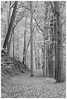 Trail in autumn forest. Mammoth Cave National Park, Kentucky, USA. (black and white)