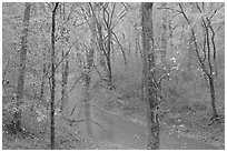Styx spring and forest in autumn foliage during rain. Mammoth Cave National Park, Kentucky, USA. (black and white)