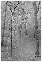 Styx stream and forest in fall foliage during rain. Mammoth Cave National Park, Kentucky, USA. (black and white)