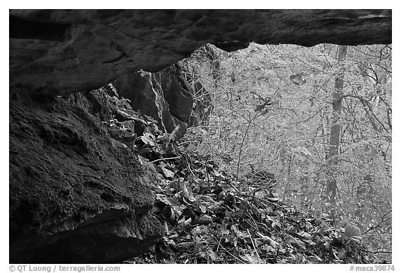 Forest with autumn color seen from inside cave. Mammoth Cave National Park (black and white)