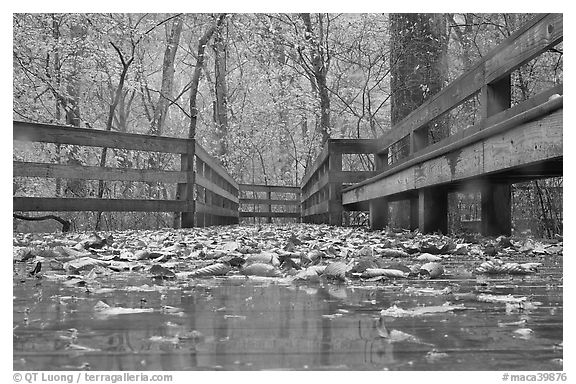Wet boardwalk during rain. Mammoth Cave National Park (black and white)