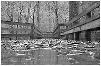 Wet boardwalk during rain. Mammoth Cave National Park, Kentucky, USA. (black and white)