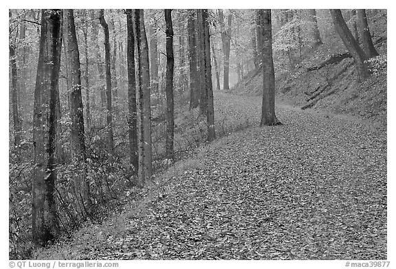 Trail with fallen leaves. Mammoth Cave National Park (black and white)