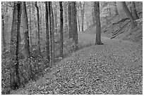 Trail with fallen leaves. Mammoth Cave National Park, Kentucky, USA. (black and white)