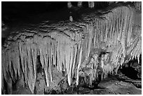 Flowstone detail, Frozen Niagara. Mammoth Cave National Park, Kentucky, USA. (black and white)