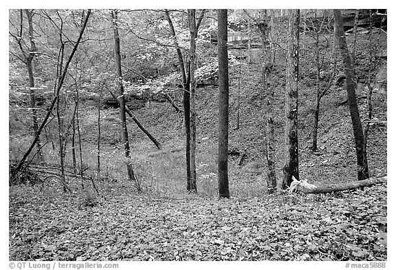 Forest in fall inside sinkhole. Mammoth Cave National Park (black and white)
