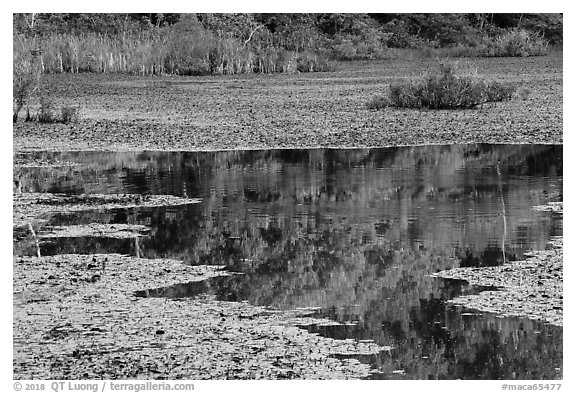 Reflections, Sloans Crossing Pond. Mammoth Cave National Park (black and white)