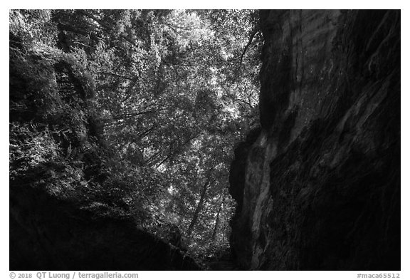 Looking up cave historic entrance. Mammoth Cave National Park (black and white)