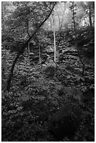 Sinkhole and fog. Mammoth Cave National Park ( black and white)