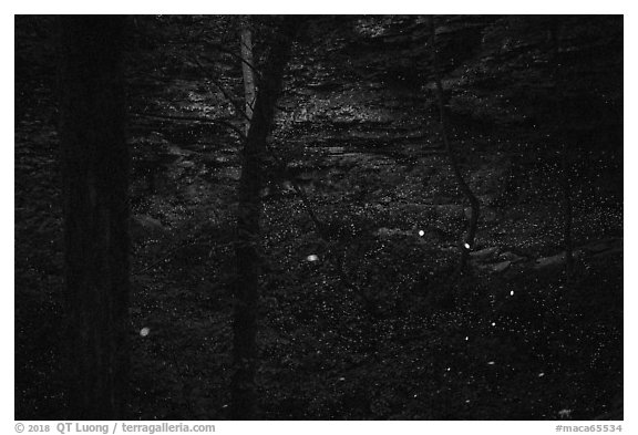 Fireflies and sinkhole. Mammoth Cave National Park (black and white)